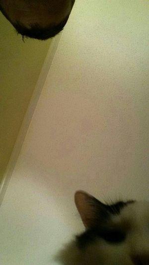 Cat Catoftheday Snapcat Caturday via www.getsnapc.at