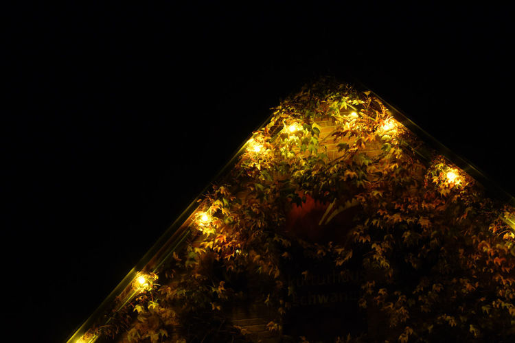 Capture Tomorrow EyeEmNewHere Night Illuminated Plant Architecture Tree No People Nature Copy Space Built Structure Sky Building Exterior Lighting Equipment Outdoors City Low Angle View Building Decoration Christmas Lights Christmas