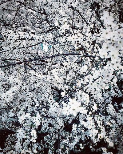 Spring Flowers Sun Heat Love Beautiful Like4like Follow Folliwme Tumblr 20likes Amazing Followme Follow4like Look Instalike Pic Food Instаdaily Instаfollow Like Instаgood Instaсool Instago Follow colorfulstyleswag
