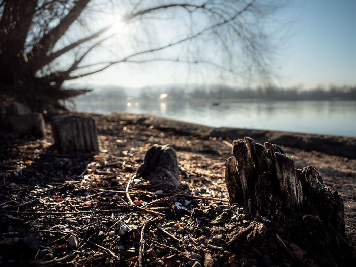 Tree Land Nature Plant Tranquility No People Wood - Material Focus On Foreground Day Water Bare Tree Forest Tranquil Scene Non-urban Scene Outdoors Field Sky Log Cold Temperature Bark Dead Plant