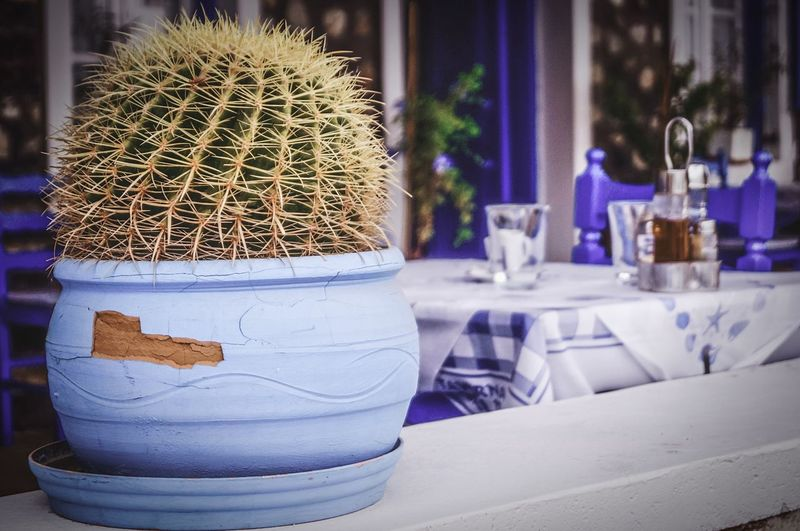 Travel Destinations Close-up Focus On Foreground Table No People Food And Drink Freshness Still Life Food Outdoors Nature Cactus Succulent Plant EyeEmNewHere