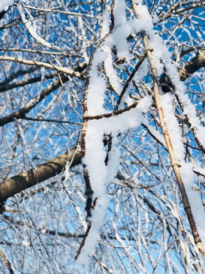Зимняя пора Branch Tree Bare Tree Winter Snow Nature Cold Temperature Day Outdoors Beauty In Nature No People Close-up Backgrounds Animal Themes