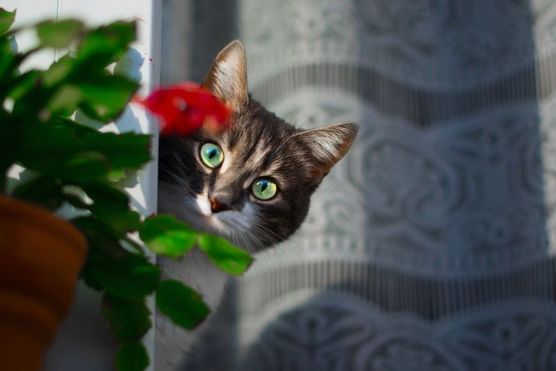 Pets Animal Themes Animal One Animal Domestic Vertebrate Domestic Animals Animal Body Part Animal Head  Close-up Selective Focus Feline Indoors  No People Domestic Cat Mammal Looking At Camera Cat Portrait Looking