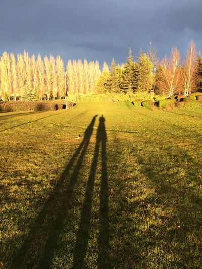 Shadows Trees Creative Light And Shadow Change Day Eskişehir Forest Grass Green Green Color Growth Landscape Light Light And Shadow Lush Foliage Narrow Outdoors Showcase: November Sunny The Way Forward Tranquil Scene Tranquility Tree Pattern Pieces The Purist (no Edit, No Filter)