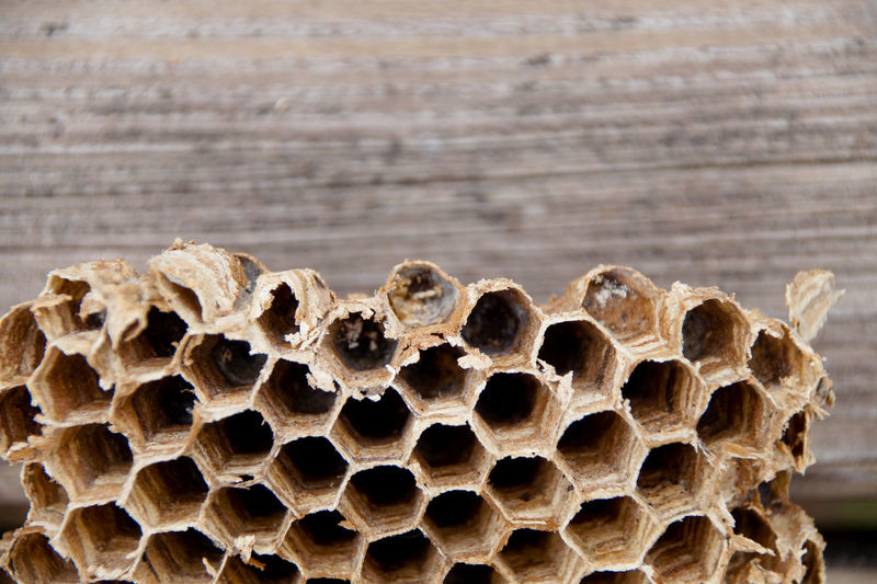 Close-Up Of Weathered Honeycomb