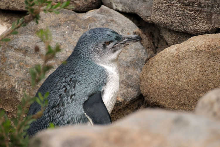 High angle view of penguin on rock