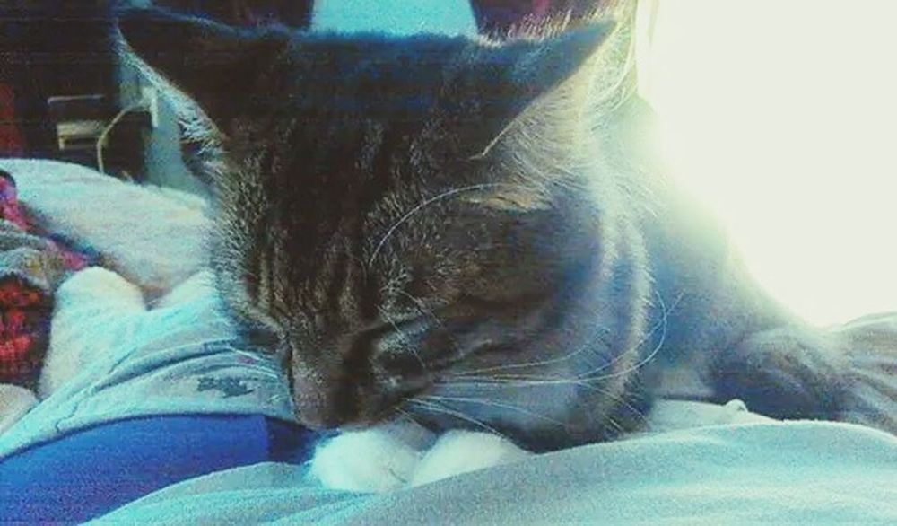 Kitty Cat♡ Zen Kitty Zen My Simple Life