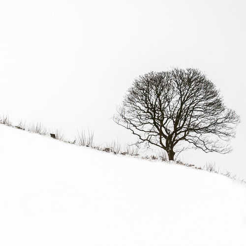 Mono snowscape Snow Winter Cold Temperature Tree Bare Tree Beauty In Nature Plant Sky Scenics - Nature Tranquility Tranquil Scene White Color Landscape Field No People Environment Non-urban Scene Covering Land Outdoors Cold Snowing Isolated Black And White