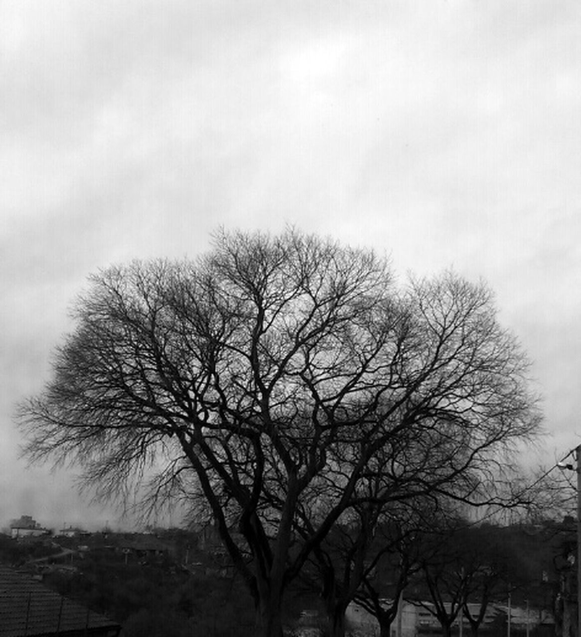 bare tree, tree, low angle view, sky, branch, outdoors, beauty in nature, nature, day, tranquility, no people, scenics