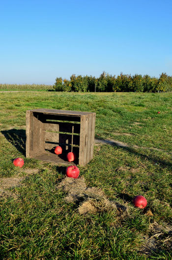 wooden box with apples Plant Nature Grass Day Land Sky No People Green Color Tree Red Field Landscape Fruit Outdoors Clear Sky Food Scenics - Nature Autumn Architecture Red Apples Apples On The Ground Wooden Box With Apples Wooden Post