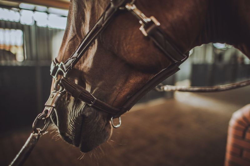 Close-up of horse at stable