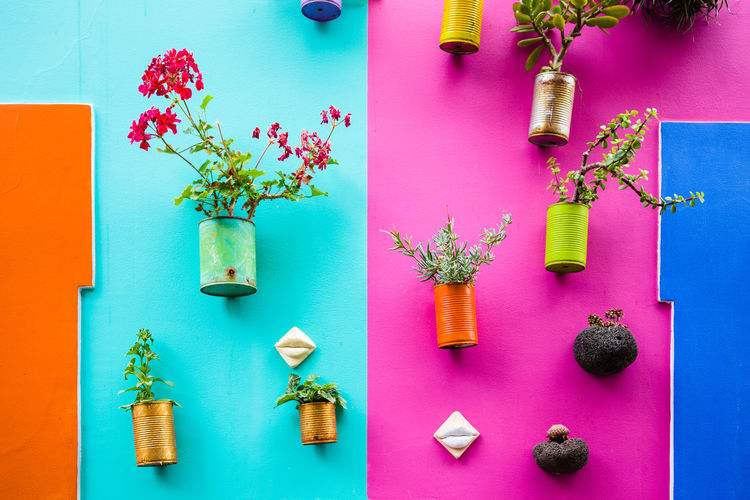 Potted plants on colorful wall