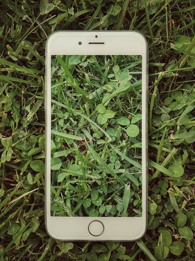 Plant IPhone Photoshop Photoshop Edit Green Color Green Samsungphotography Galaxy White White Color Communication Wireless Technology Technology Close-up Grass Cellphone Plant Life Screen Camera Glasses Colored Growing Pollen