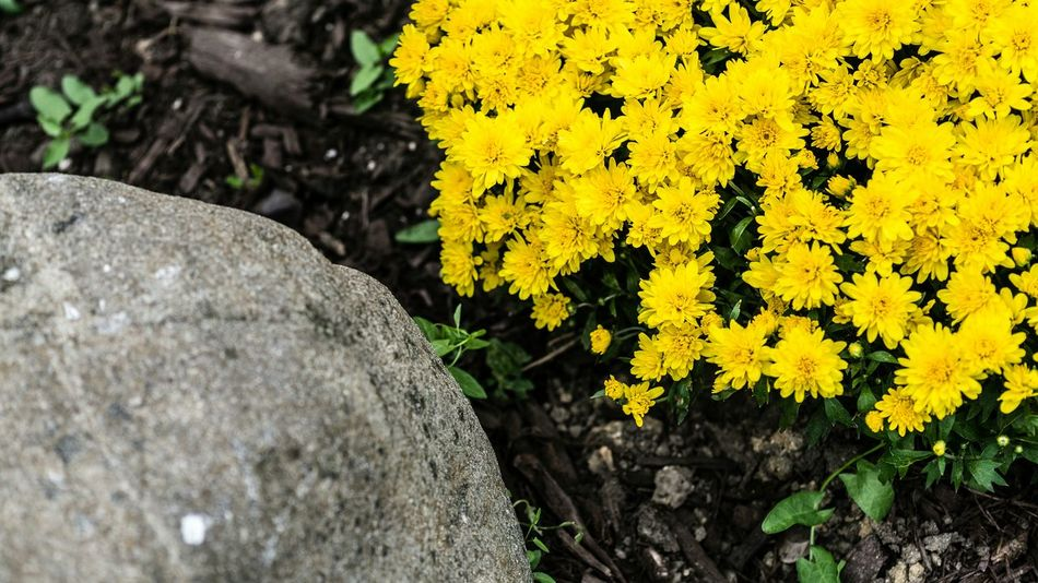 Opposites. Vivid Flowers Rock Opposite Inanimate Object Corners Diagonals Yellow Sony A6000 Project365