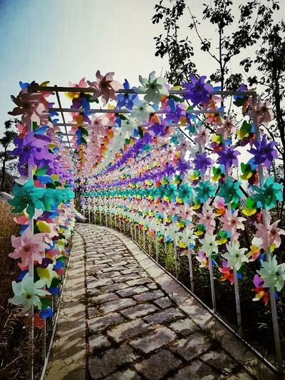 The Five Senses My Travel  Infancy Pinwheels Colorful Taking Photos Original Experiences Enjoying Life Beautiful World Beatiful China Culture Sunny Day Summer Handmade Amazing View