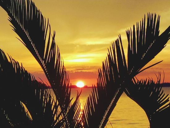 Live For The Story Sunset Nature Scenics Sunlight Sky Outdoors Backgrounds Sea Beauty In Nature Water Tranquility Landscape Horizon Over Water Palm Tree No People Summertime Summer Sunset Lake View Summer Exploratorium