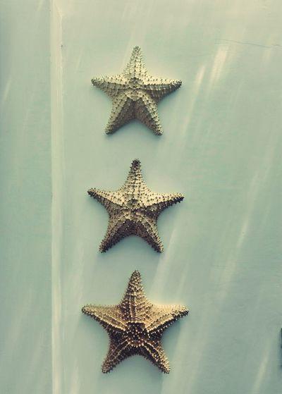 Starfish decoration on wall