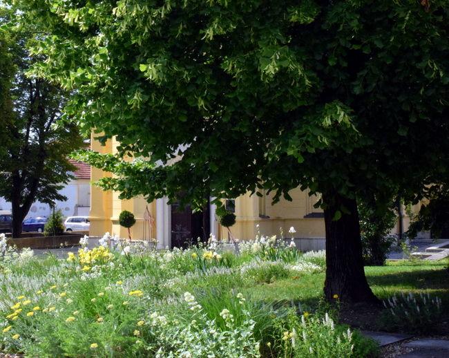 Church yard.