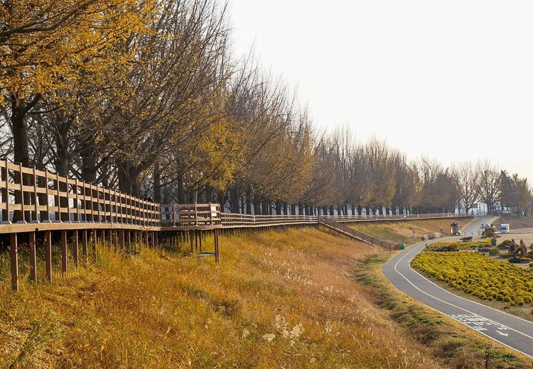 Bridge - Man Made Structure Tree Road Connection Transportation Outdoors No People Nature Day Landscape Scenics Sky Clear Sky Bare Tree Grass Architecture Beauty In Nature