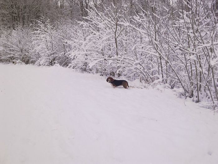 Hounddog In The Snow Snow Winter Cold Temperature Wolf Full Length Dog