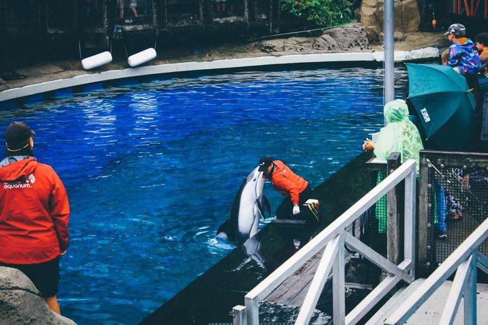 Canada Vancouver Vancouver Aquarium Dolphin