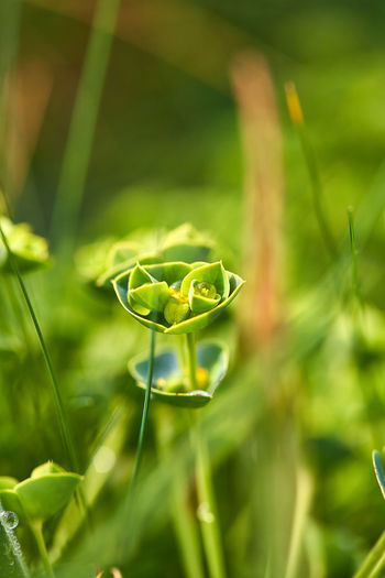 Close-up of green plant on field