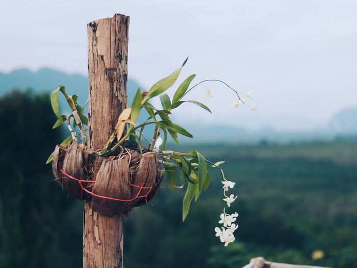 Close-up of wooden post on plant in field against sky