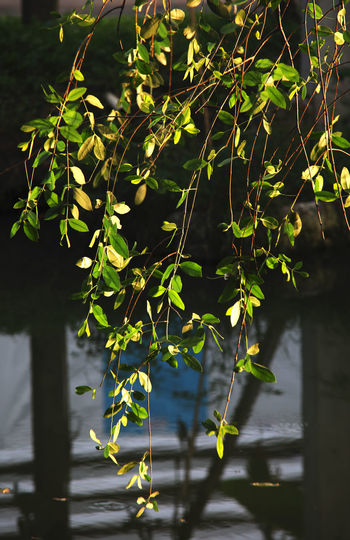 Leaf Leaves Leaf Photography Leaves Photography Leaf On The Tree Leaf On A Tree Leaves On A Tree Beauty Of Nature