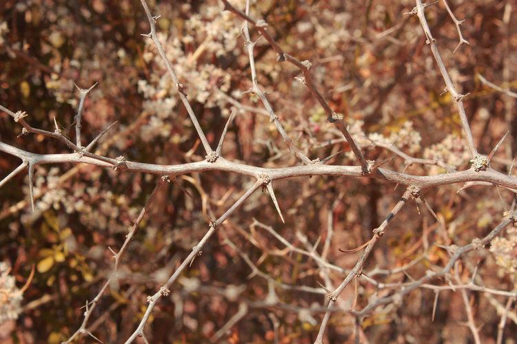 Botany Dry Leaf Vein Natural Pattern Plant