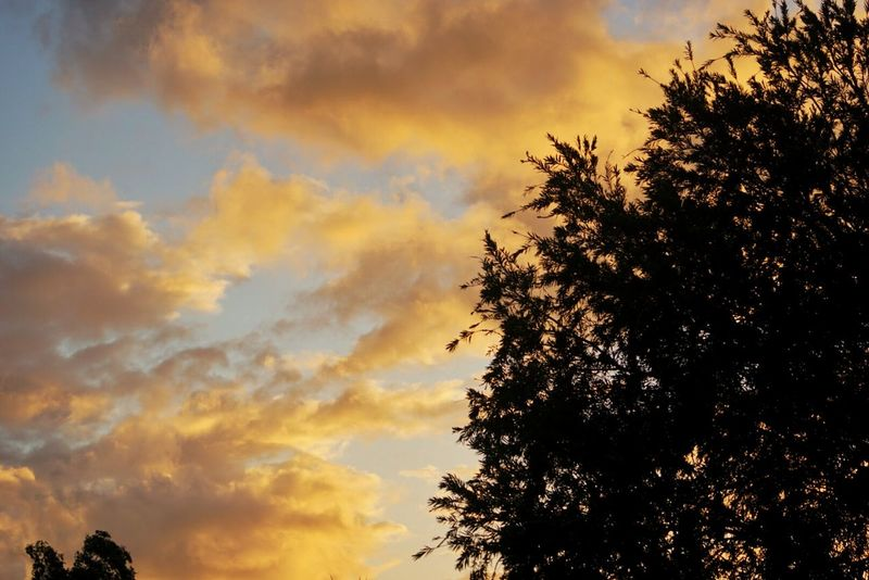 Mauritius Island  Garden Photography Afternoon Sky Golden Moments 43