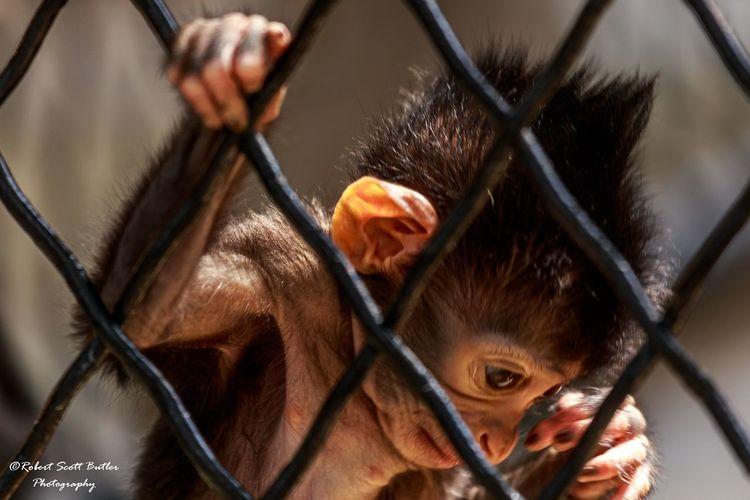 Hanging Out Zoophotography Zoo Animals  Zoo Babymonkey Monkey Sad Face Sadeyes Animals