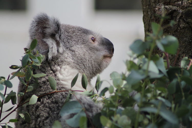 Close-up of a squirrel on tree