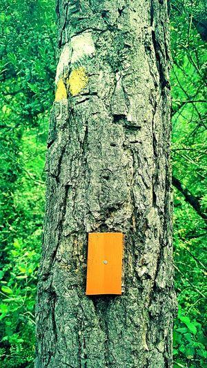 Signals Hiking