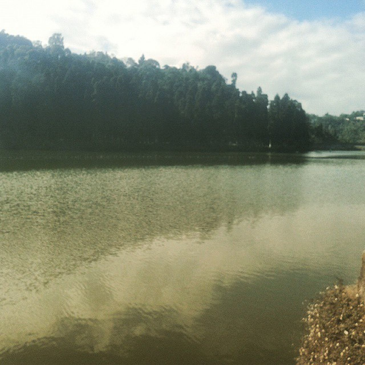 tree, water, nature, lake, reflection, tranquility, no people, scenics, tranquil scene, outdoors, beauty in nature, forest, day, sky, landscape