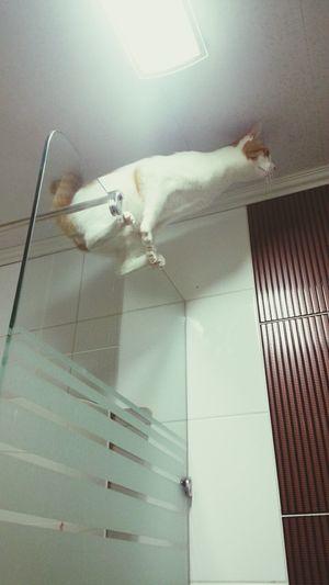 Cat 묘기대행진