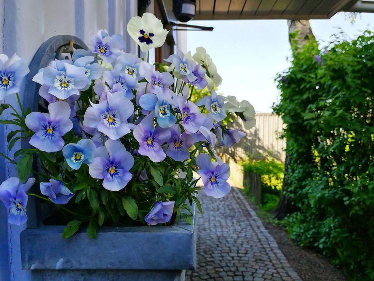 Flower Outdoors Summer Beauty In Nature Stockholm Takenbyme📷 Lovelyview Photography Landscape Gothenburg, Sweden
