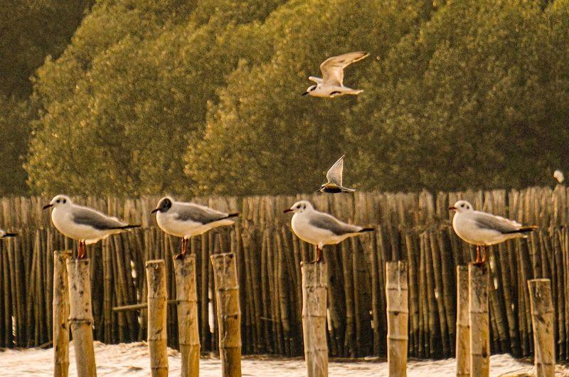 Seagulls ☀️