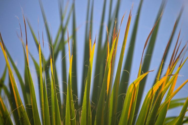 Close-up of fresh green grass against sky