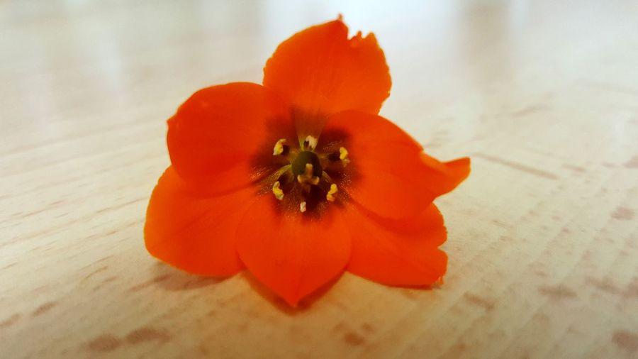 Flower Single