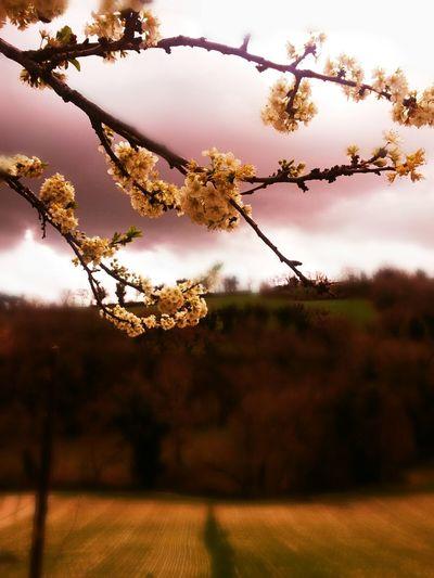 Whispers Of Spring EyeEm Nature Lover