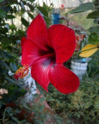 Flower Red Nature Beauty In Nature Flower Head Outdoors Turkey Türkiye First Eyeem Photo Naturelovers Popüler Fotoğraflar Doğa Botany Cicekler Edirne Doğalyaşam