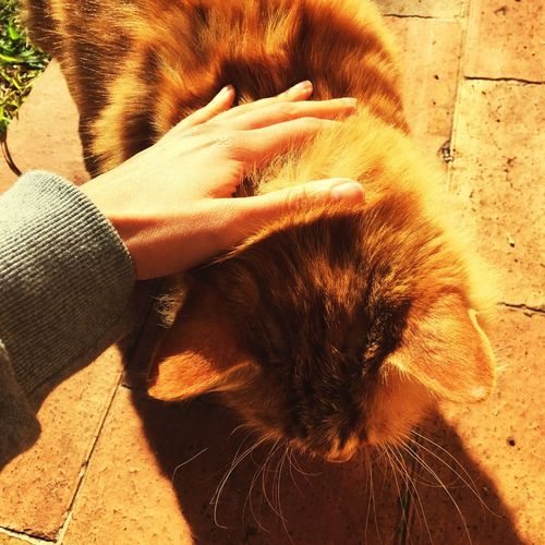 Cropped hand touching cat on footpath