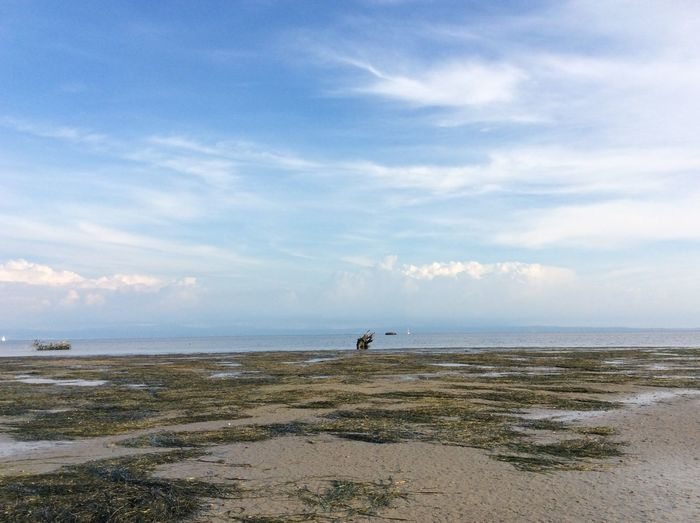 Landscape of seaweed on beach Cloudy Growing Lonely Weather Beach Beauty In Nature Blue Cloud - Sky Clouds Day Dried Horizon Over Water Mud Nature Outdoors Pool Puddle Sand Sea Shore Sky Tranquility Water White