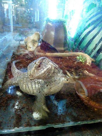Zoo Animal Themes Aquarium Close-up Day Freshness Indoors  Monitor Lizard Nature No People Varan