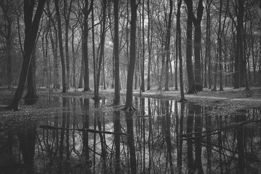 january melancholy Fall Sadness Winter Faded Melancholy Mood Tranquil Scene Tranquility Silence Light And Shadow Lucky's Memories Lucky's Monochrome Monochrome Blackandwhite Photography Black And White Monoart Forest Puddle Water Reflection Backgrounds Full Frame Tree Pattern Abstract Scenics Calm Woods Idyllic