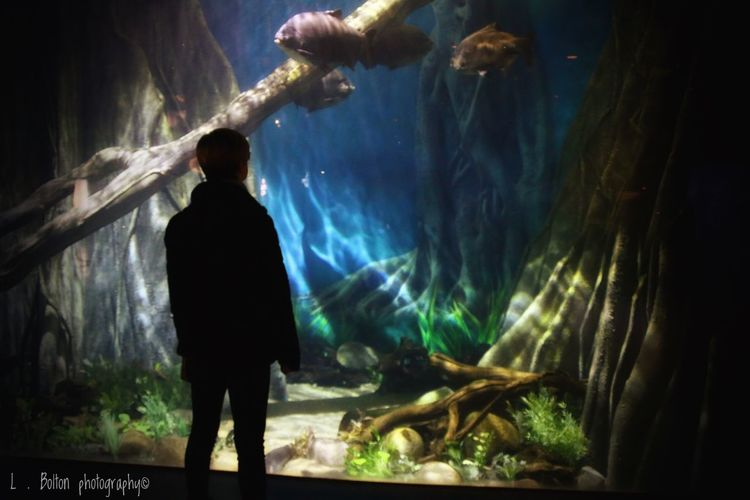 Mother, Looking at a magical world. At the Deep in Hull City, England Magical