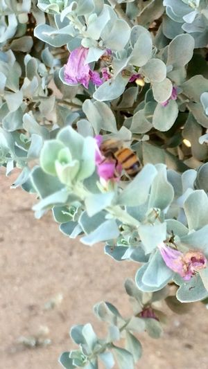 Hard working Bizzy Bee 🐝 Flower Beauty In Nature No People Close-up Outdoors Having Fun With Nature Insect Theme IPhone Photography Me Alone Nature Walk Glorious Morning Light Bee Insect Insect Photography Perspectives On Nature