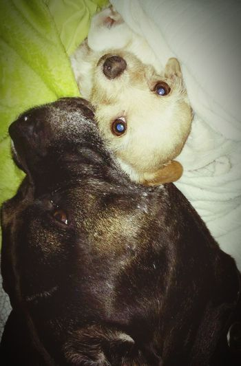 Puppy Love Odd Couples Check This Out The 00 Mission Love Dogs Of EyeEm Rest In Peace ❤ My Bestfriends ❤ my little girl Tinkerbell and big~n miss them both.. Rest in peace
