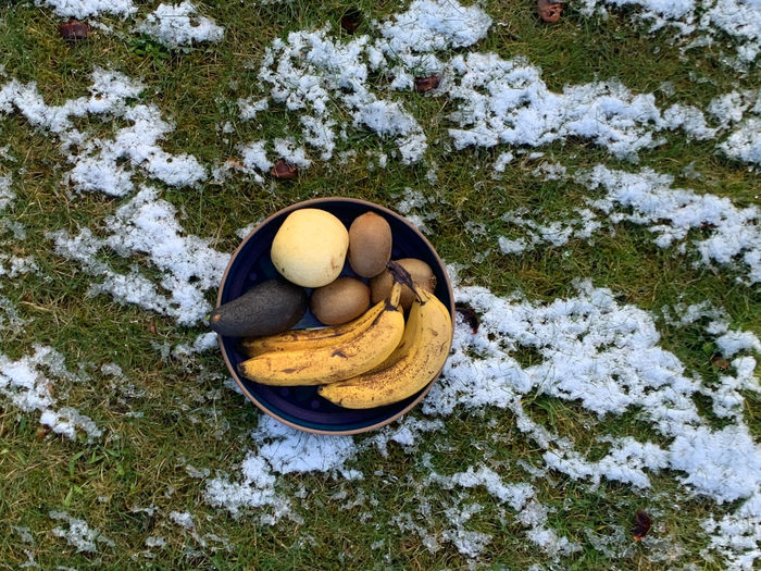 High angle view of fruit on snow covered land