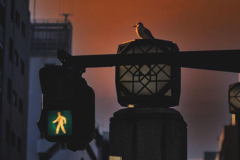 Silhouette bird perching on a light